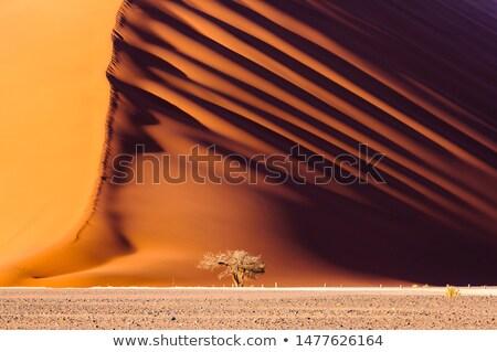 Намибия стране флаг карта форма текста Сток-фото © tony4urban