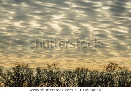 Bare treetops on winter afternoon Stock photo © stevanovicigor