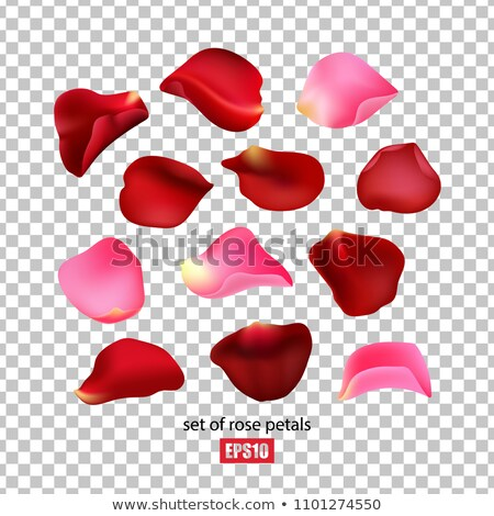 heart of red rose petals isolated eps 10 stock photo © beholdereye