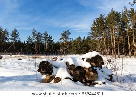 yakacak · odun · kar · ahşap - stok fotoğraf © stevanovicigor