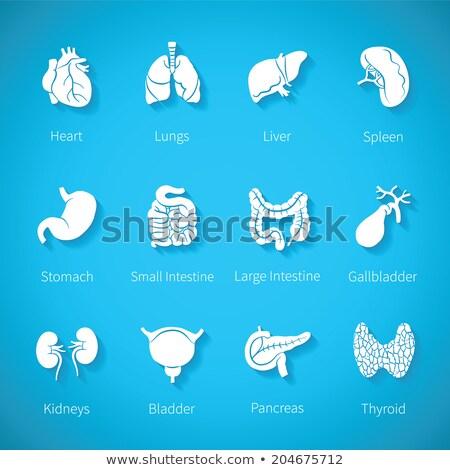 human stomach symbol set stock photo © tefi