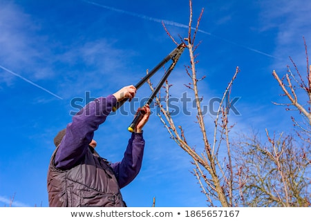 Loppers and branches Stock photo © stevanovicigor