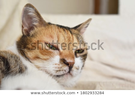 cute orange cat laying down Stock photo © feedough