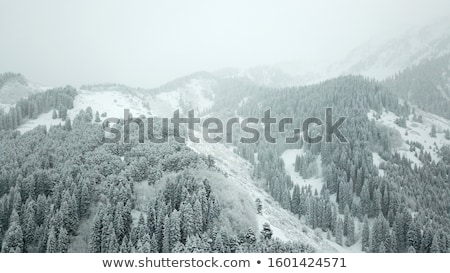 View from height to the winter forest covered with snow and stan Stock photo © vlad_star