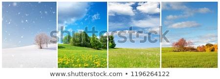 estate · palme · albero · primavera · sfondo - foto d'archivio © bluering