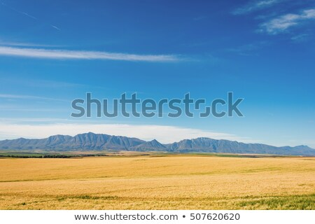 South african farmland Stock photo © IS2