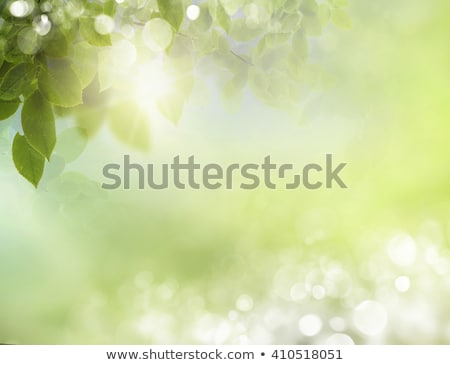 Defocused floral background with leaves Stock photo © furmanphoto