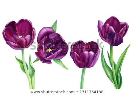 Lila virágok tulipánok természetes textúra virágcsokor Stock fotó © vapi
