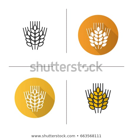 Color Designed Barley Wheat Spike And Seed Set Vector Stock photo © pikepicture