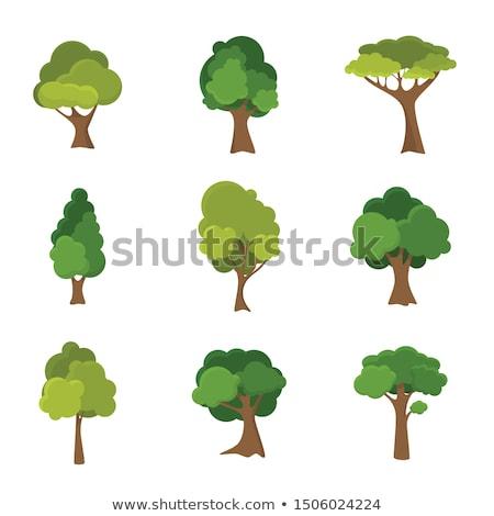 Verde cenário árvores floresta vetor Foto stock © robuart