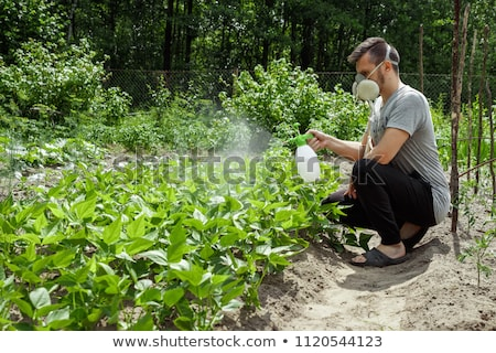 Man in Protective Mask Spraying on Plants, Farmer Stock photo © robuart