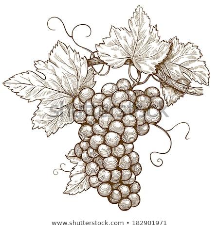 Winogron winorośli pozostawia stylu wina Zdjęcia stock © Krisdog