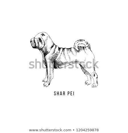 Chinese sharpei hondenras cartoon retro tekening Stockfoto © patrimonio