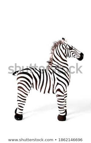 Wild zebra permanente alleen witte illustratie Stockfoto © bluering
