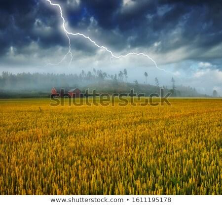 Weide onweersbui strand hemel boom bos Stockfoto © basel101658