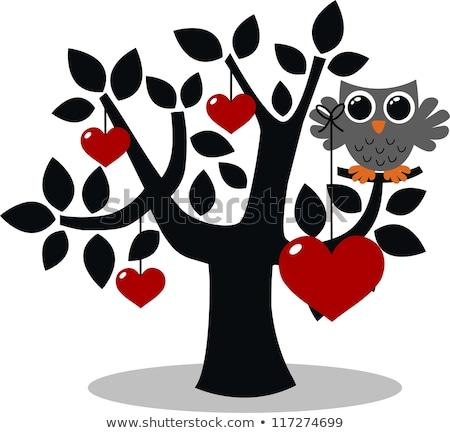 совы семьи дерево природы птица Сток-фото © popocorn
