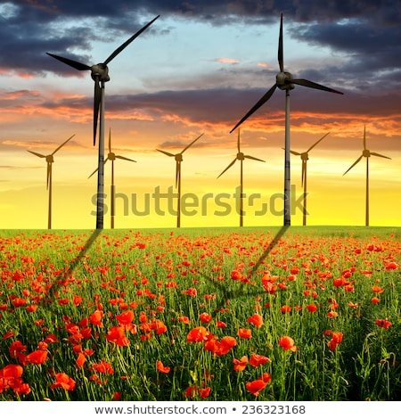 the poppy and the wind turbine Stock photo © njaj