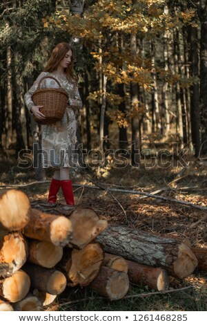Woman collecting mushrooms in the forest Stock photo © photography33