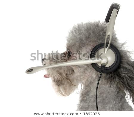 Telemarketing köpek müşteri hizmetleri hazır yardım iletişim Stok fotoğraf © stuartmiles