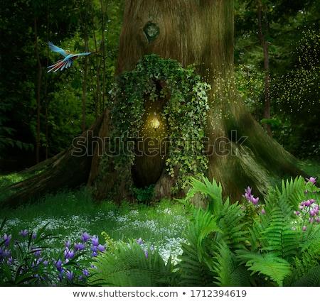 magie · fleur · forêt · oiseaux · stylisé · cartoon - photo stock © szsz