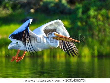 Bianco shot acqua uccello stagno Foto d'archivio © saddako2