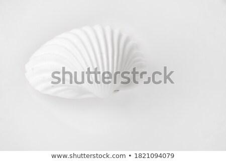 One beige shellfish against a white background Stock photo © wavebreak_media