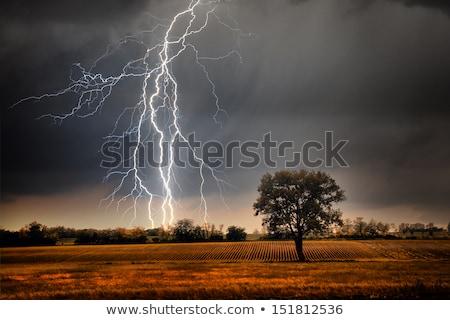 ağaç · yıldırım · kir · alan · karanlık - stok fotoğraf © mike_expert