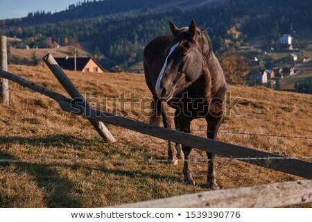 Broken Fence on a Farmers Pasture Stock photo © rhamm