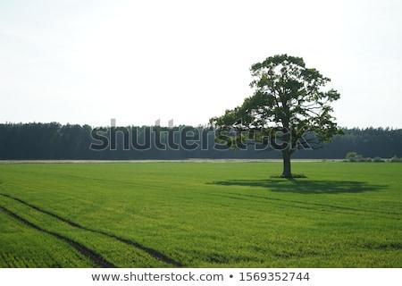 Stockfoto: Groene · landschap · blauwe · hemel · water · wolken · natuur