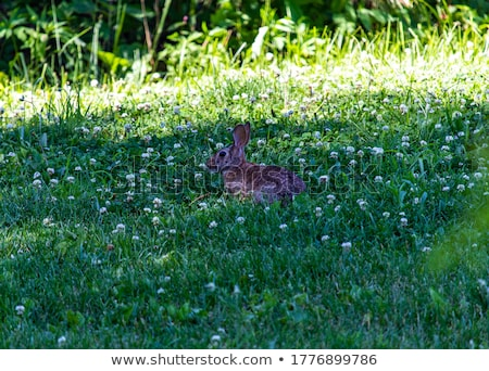 красивой кролик небольшой белый вечеринка портрет Сток-фото © taden