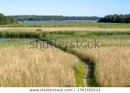 kicsi · tó · Finnország · kék · higgadt · tájkép - stock fotó © tainasohlman