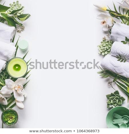folhas · verdes · planta · mulher · mãos · mulher · jovem - foto stock © ongap