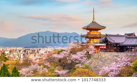 весны сакура природы Японский розовый вектора Сток-фото © Ansy
