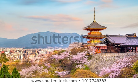 Bahar sakura doğa Japon pembe vektör Stok fotoğraf © Ansy
