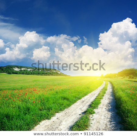field of grass and deep blue sky with sun stock photo © mycola