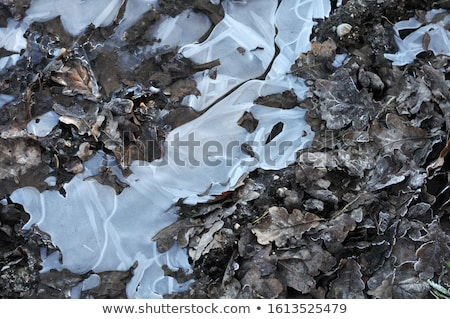 Stock photo: ice puddle in the oak forest