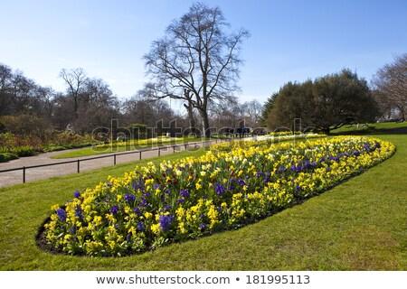 Narcissen park bloem bloemen bomen Stockfoto © chrisdorney