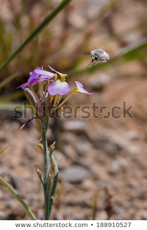 Abeille volée insecte famille ordre beaucoup Photo stock © danielbarquero
