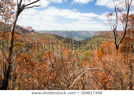 Charred trees in Blue Mountains Australia Stock photo © backyardproductions