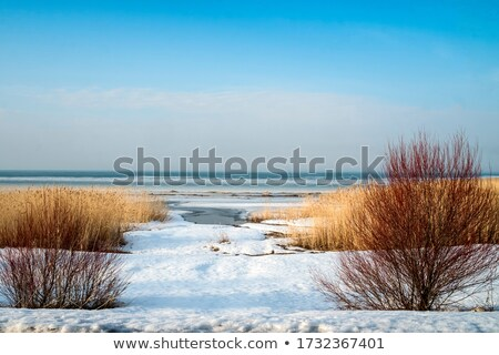 Kar kurutulmuş kış gün Stok fotoğraf © Mps197