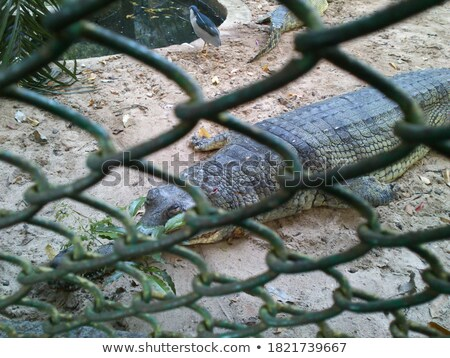 Crocodilo ferro isolado branco fundo indústria Foto stock © Valeriy