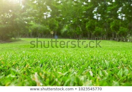 Close up Green grass field Stock photo © stoonn