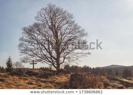 öreg fából készült kereszt föld zöld fű égbolt Stock fotó © mayboro1964
