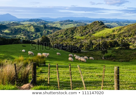 New Zealand Bush Hills Stock photo © rghenry