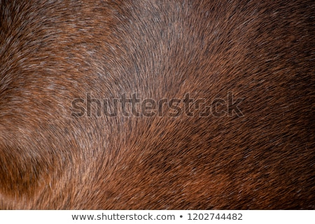 horse hair skin texture brown and white stock photo © lunamarina