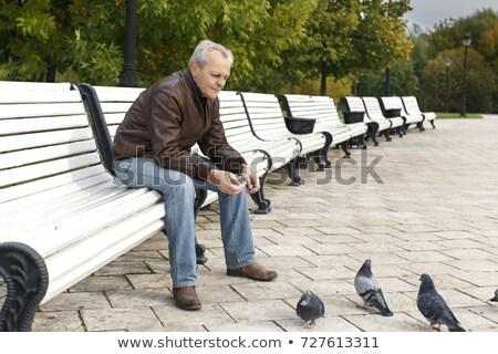 piccione · erba · verde · amore · uccello · ritratto · animali - foto d'archivio © paha_l