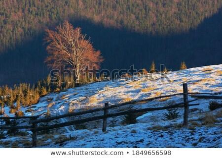 Foto stock: Solitário · árvore · cerca · aldeia · manhã · paisagem