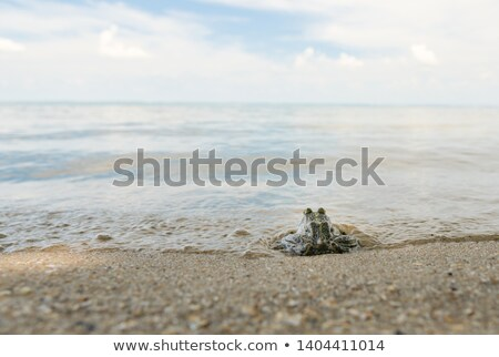 Stock photo: Green frog on the beach