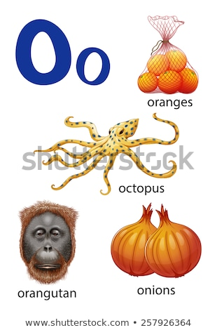 Things that start with the letter O Stock photo © bluering