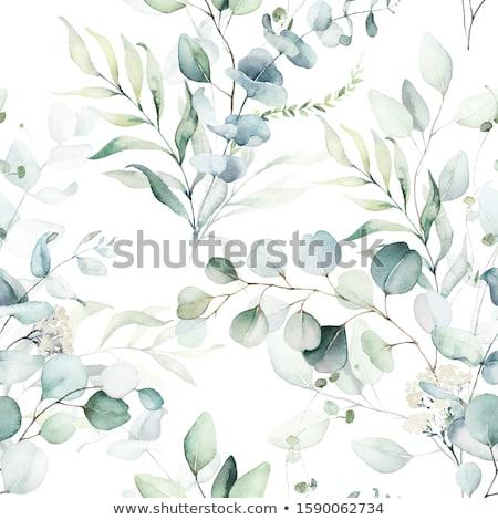 cartão · postal · árvores · verde · cor · primavera · folha - foto stock © aliaksandra